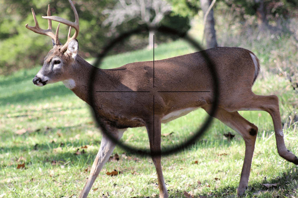 Deer hunting with crossbow
