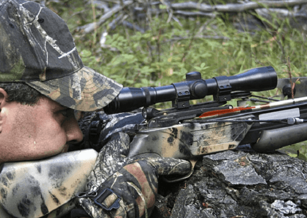 shoot deer with crossbow