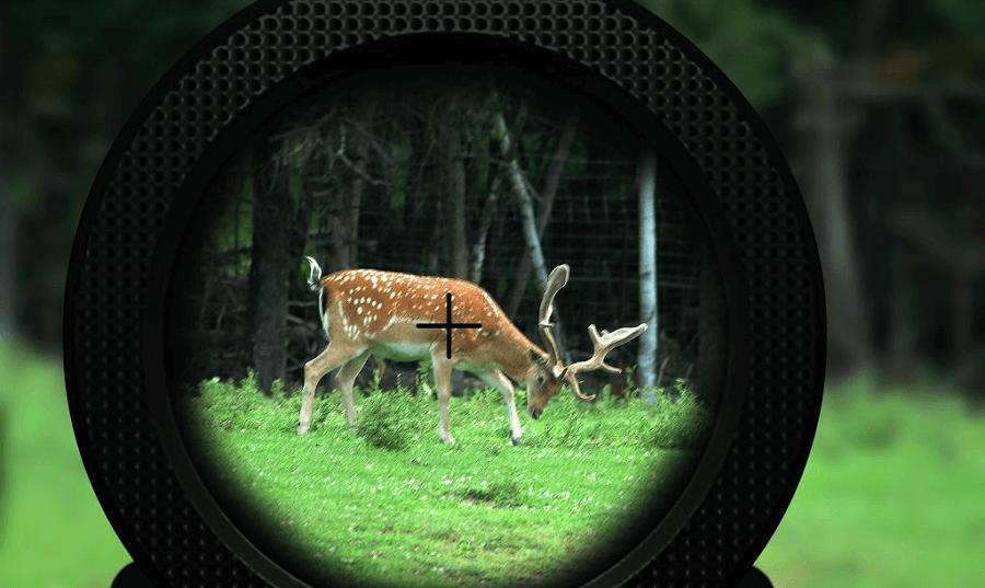 Crossbow deer hunt