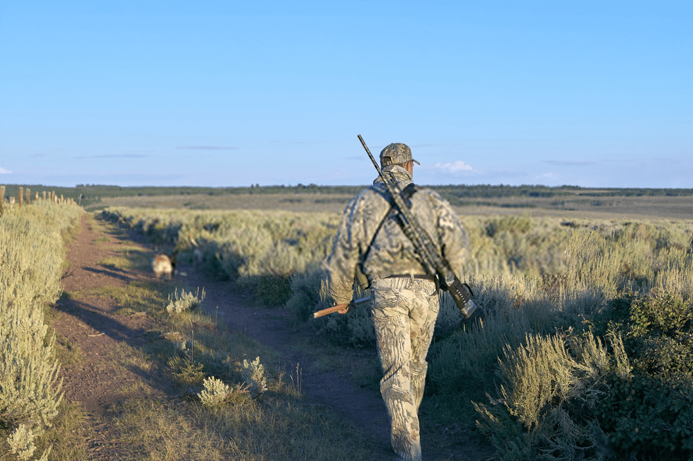 hunter searching coyote