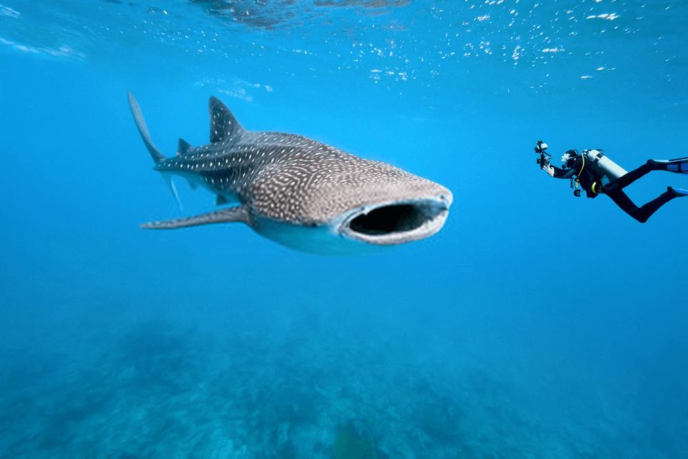 fishing camera